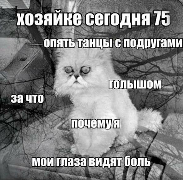 Трагические мемы от кота