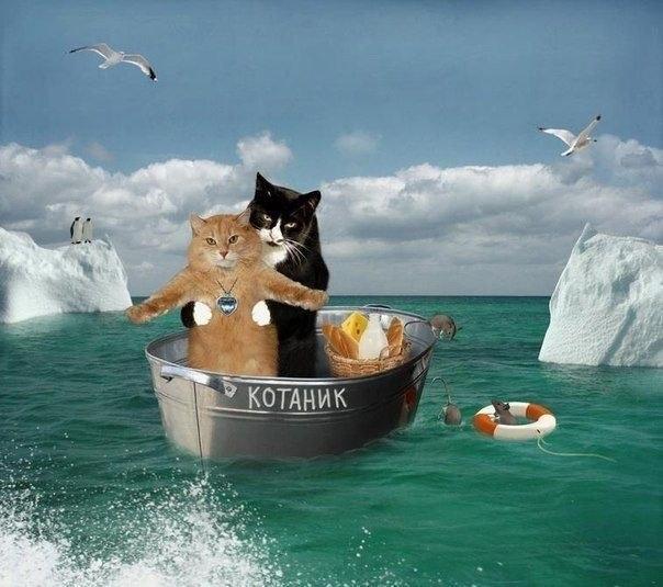 """Прикольная картинка с котами """"Титаник"""""""