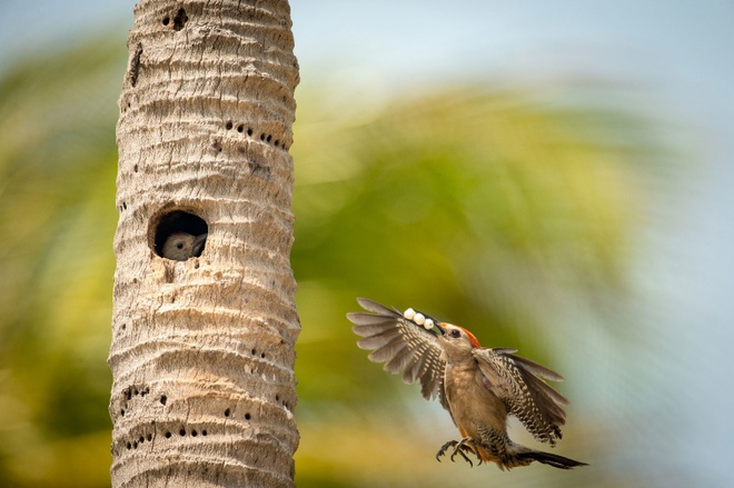В мире птиц