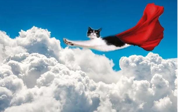Кот - Звезда фотошопа