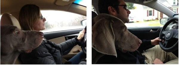 Жена говорит, что водит машину лучше меня. Посмотрим, что на это скажет наша собака