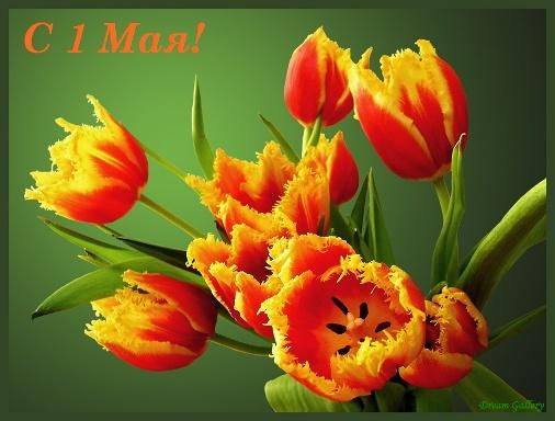 Цветы на 1 мая