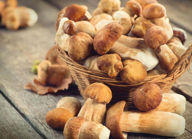 белые грибы сегодня