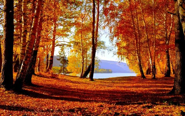 Осенний лес и озеро