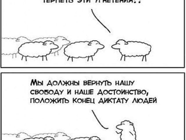 Анекдот Про Овец