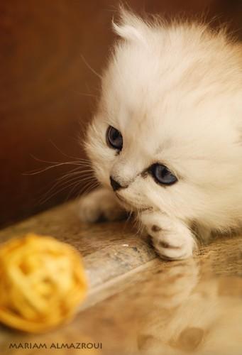 Кошечки-хаврошечки