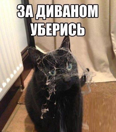 Он любимец, он же кот, он и в доме уберет