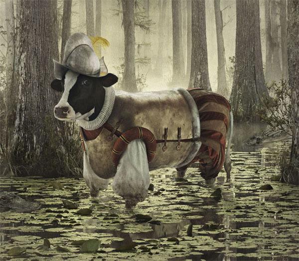 Коровы путешественницы