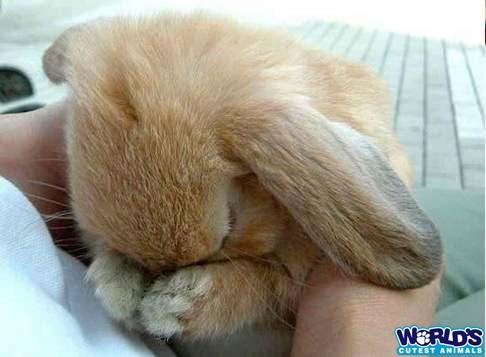 Веселые кролики