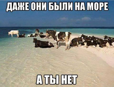 Даже они были на море