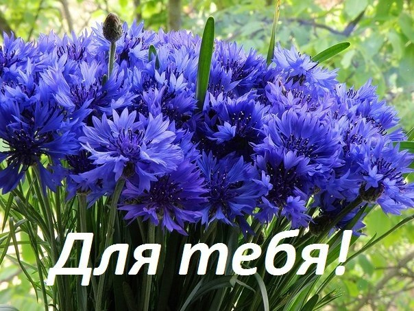 Красивые цветы для тебя!