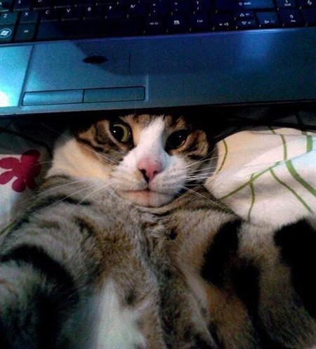 Подборка лучших кото-селфи