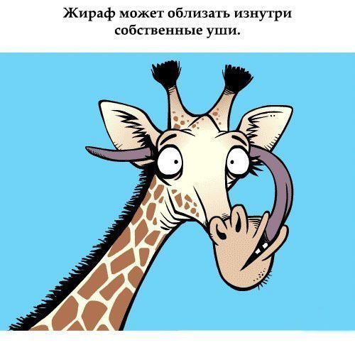 Подборка прикольных фактов о животных