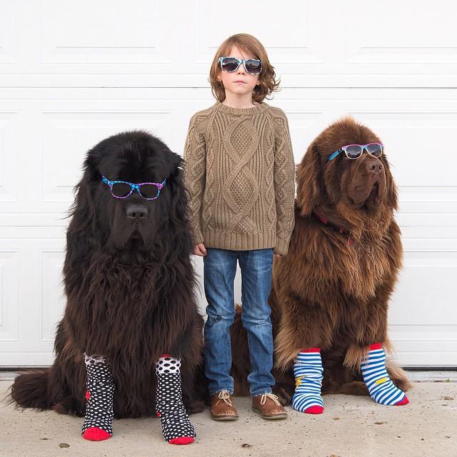 Джуліан і його собаки