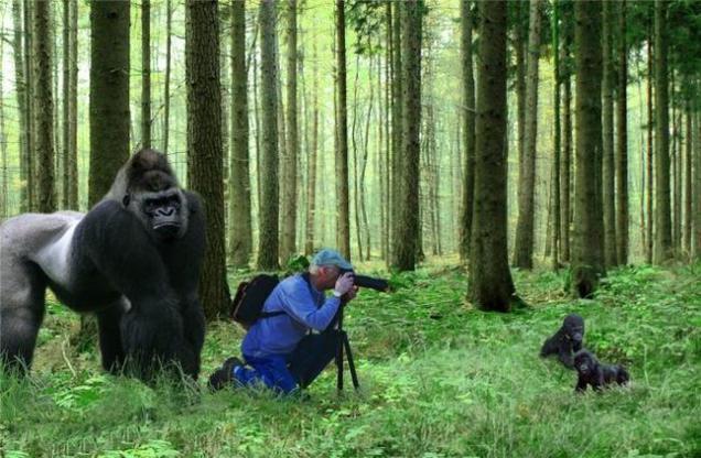"Фотоподборка ""За секунду до"""