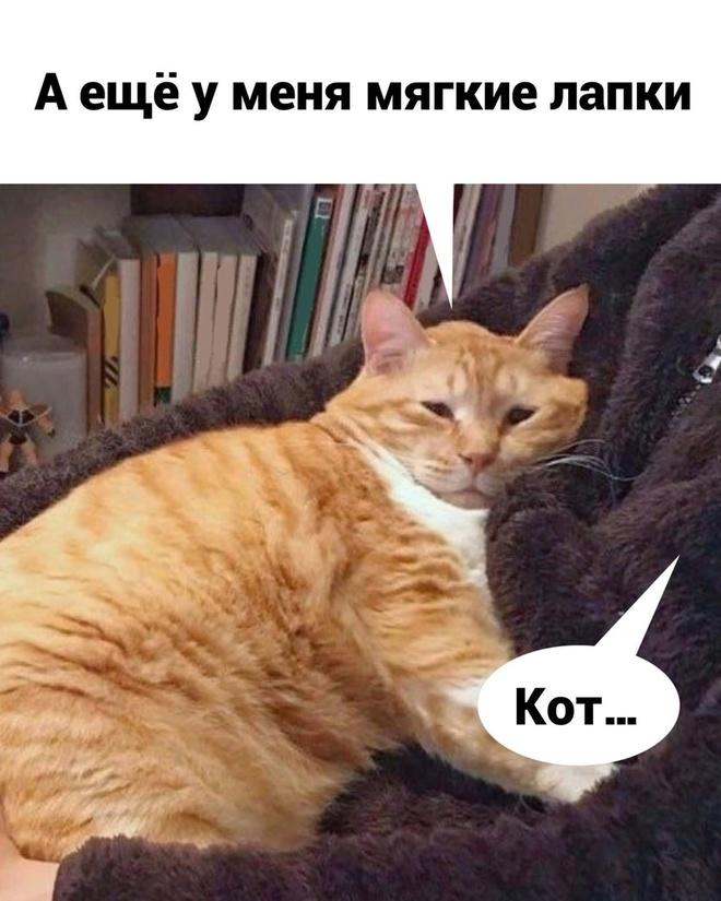 Котик и работа