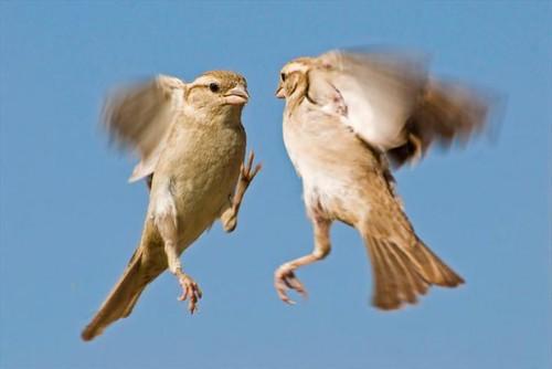Птичечки
