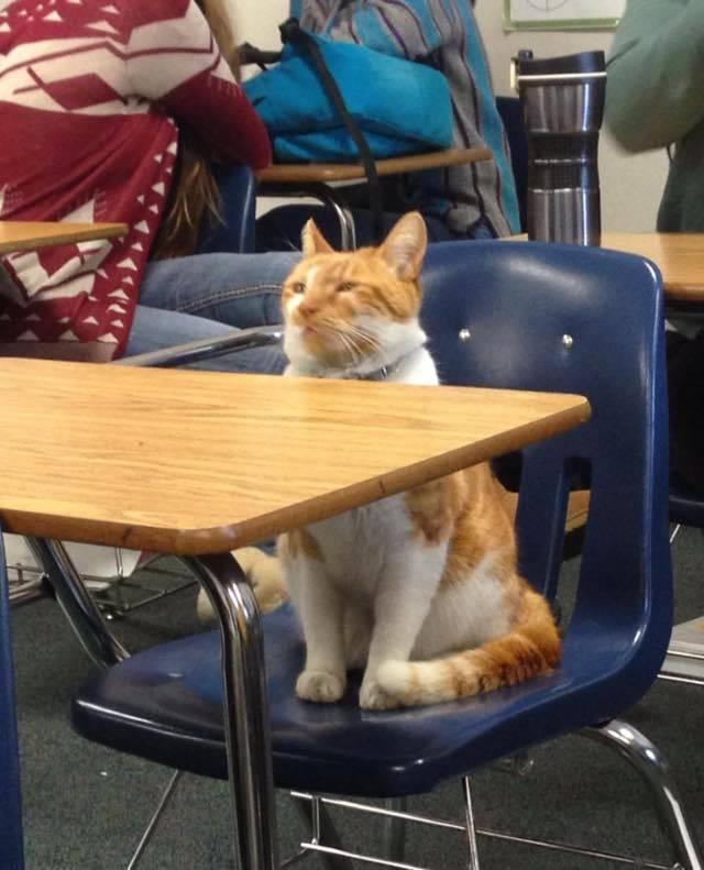 The School Cat