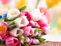Красочный букет тульпанов