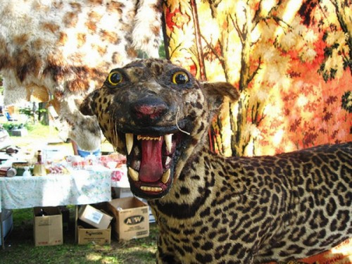 Смешные чучела животных