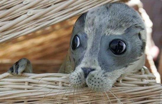 Трогательный малыш тюленя