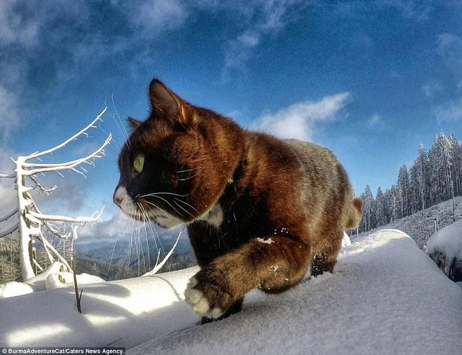 Чувство, когда жизнь кота насыщенней твоей