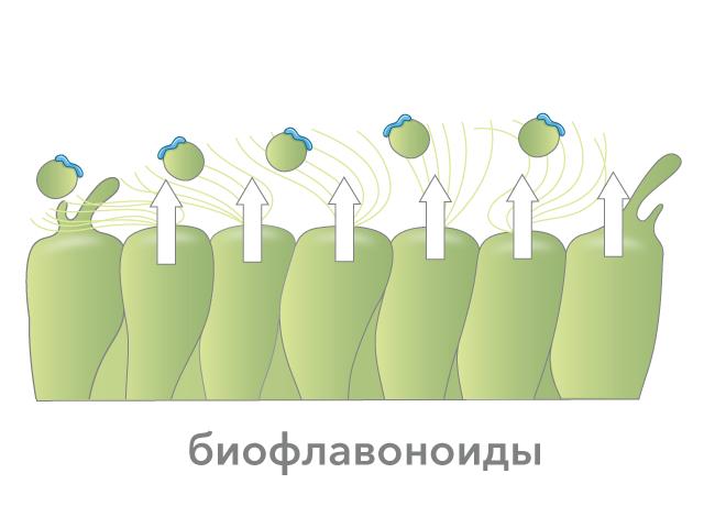 Таблетки против капель в нос при лечении насморка