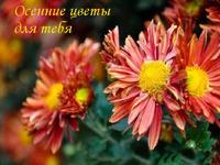 Осенние цветы на праздник