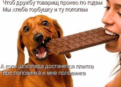 Поделись шоколадкой с другом