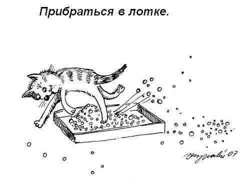 Что должен уметь делать каждый кот