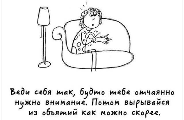 Комикс про котов