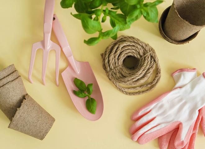 Какие растения посадить дома для салатов