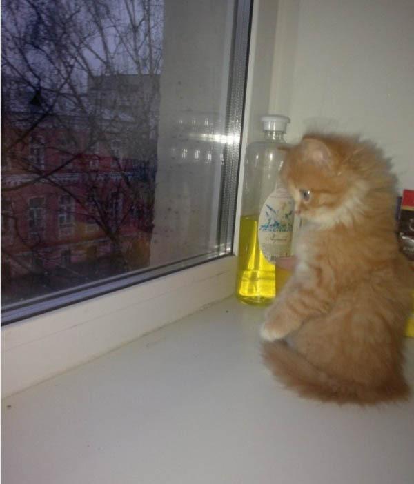 Первый дождик в жизни котенка