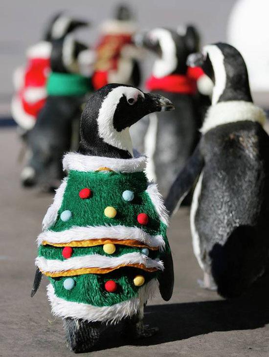 Пингвины готовятся с Рождеству