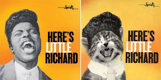 Как бы выглядели обложки известных альбомов с котиками от Alfra Martini