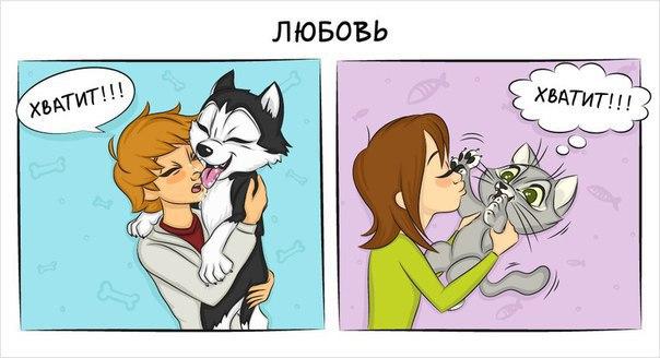 Как отличается жизнь с кошкой от жизни с собакой