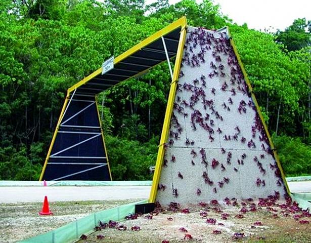 Мосты для животных: Christmas Island National Park