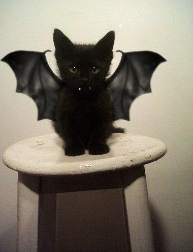 Вампиреныш Дракулито