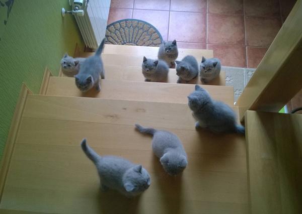 Кошачье вторжение
