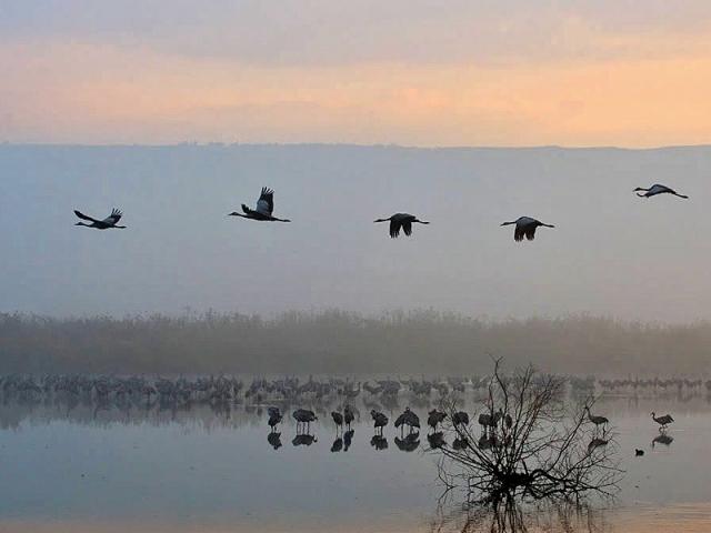 Путешествуем вслед за птицами: миграция журавлей