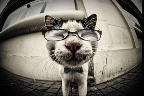 Няшки в очках
