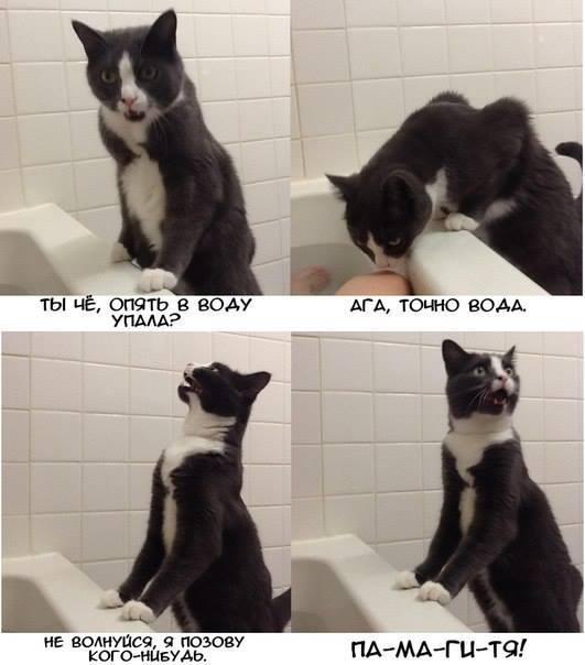Кот всегда придет на помощь