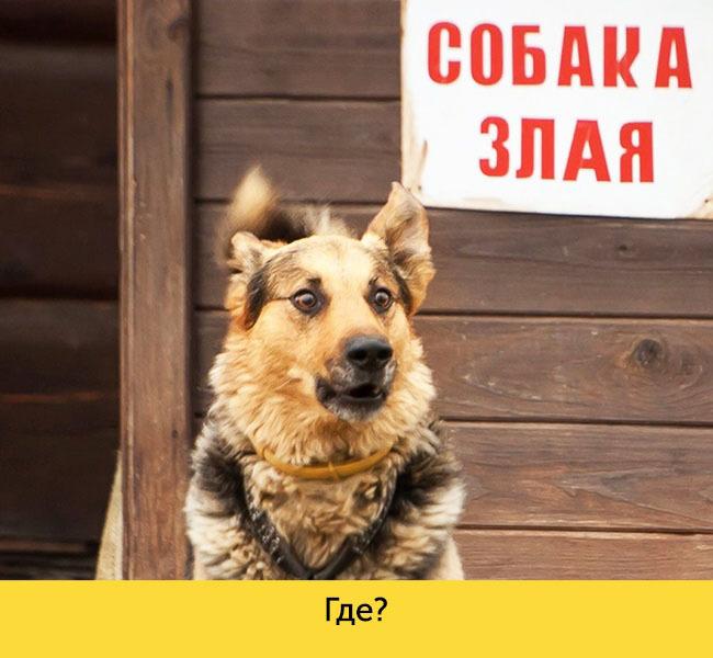 ТОП 15 собак с невероятной мимикой