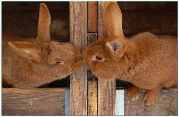 Романтические поцелуйчики