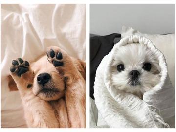 Собаки для квартиры