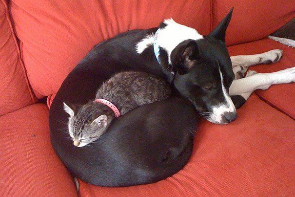 Собаки лучше кровати