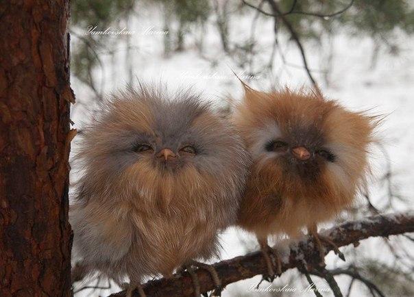 Милые совята