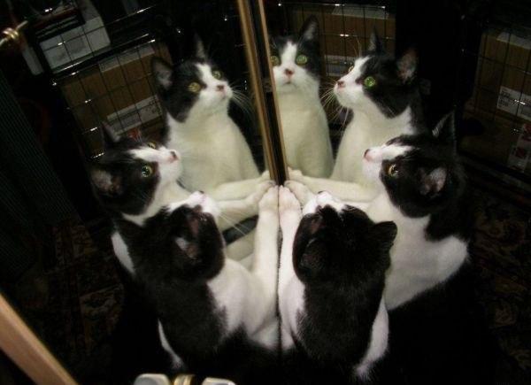 Круговорот котэ в природе