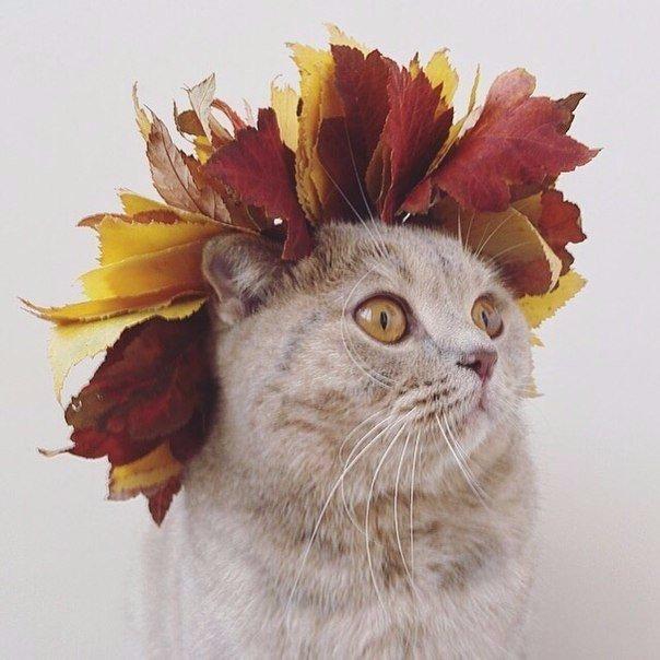 мои аватарки этой осенью