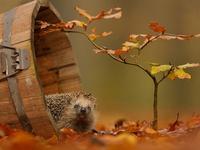 Ежик и осень
